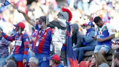 Newcastle Knights McDonald Jones Stadium